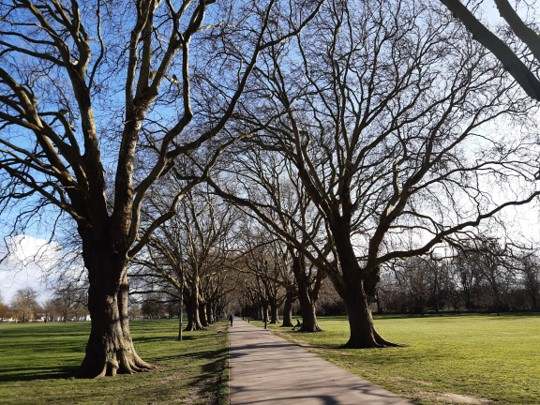 Cambridge City Council's i-Tree Eco study will value the city's urban forest